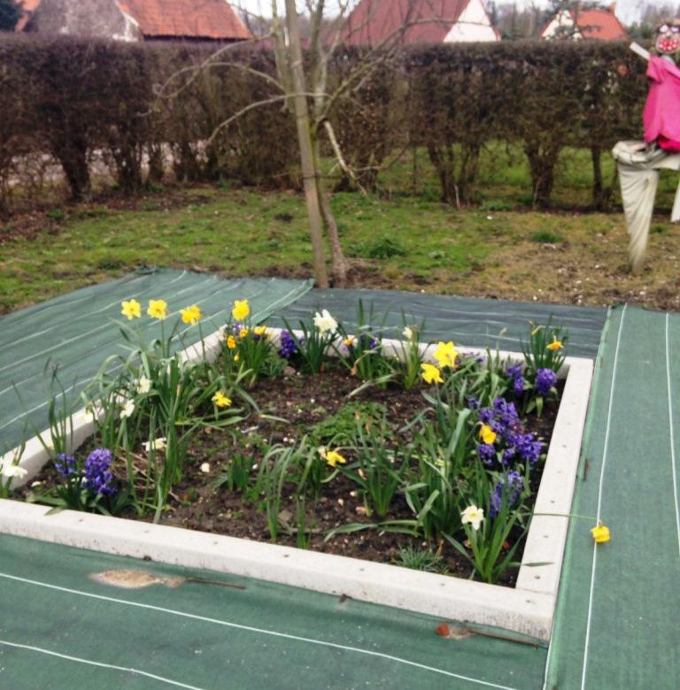 Fleurissement mars 2016 (1)