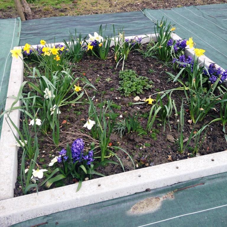 Fleurissement mars 2016 (3)