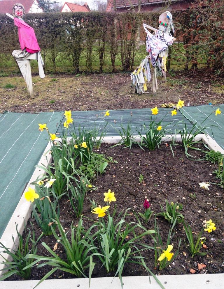 Fleurissement mars 2016 (5)